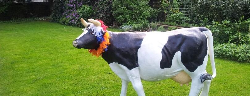 Koe met rood-wit-blauw-oranje slinger om.